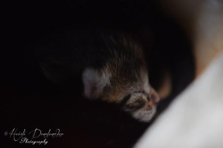 Bieke en haar kittens_021