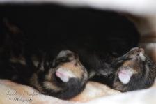 Bieke en haar kittens_025