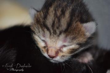 Bieke en haar kittens_028