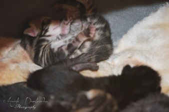 Bieke en haar kittens_031