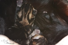 Bieke en haar kittens_035