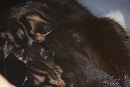 Bieke en haar kittens_036