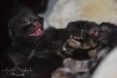 Bieke en haar kittens_040