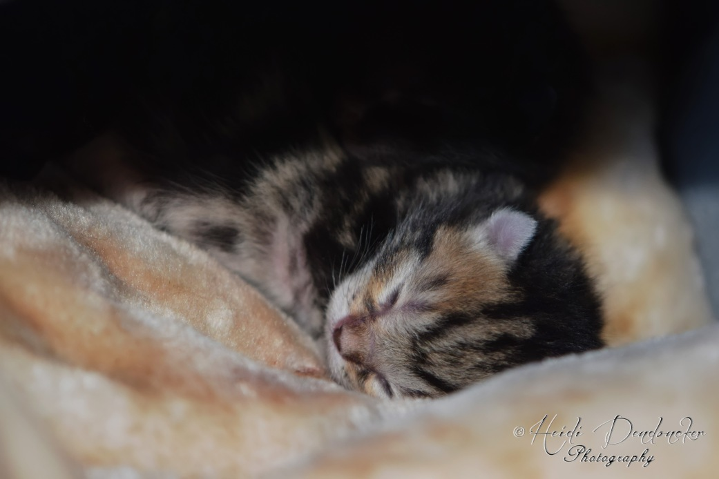 Bieke en haar kittens_042