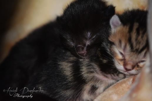 Bieke en haar kittens_044