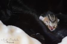 Bieke en haar kittens_048
