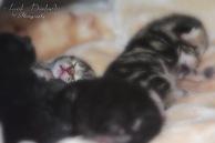 Bieke en haar kittens_051
