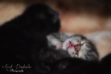 Bieke en haar kittens_053