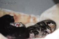 Bieke en haar kittens_054