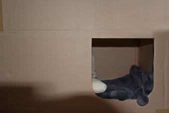 Geïmproviseerd kraamkamertje / improvised kitten room