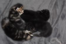 Bieke en haar kittens_064