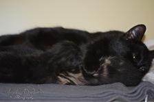 Bieke en haar kittens_068