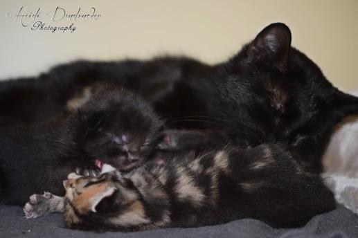 Bieke en haar kittens_069