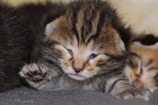 Bieke en haar kittens_073