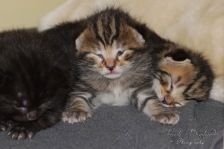 Bieke en haar kittens_074