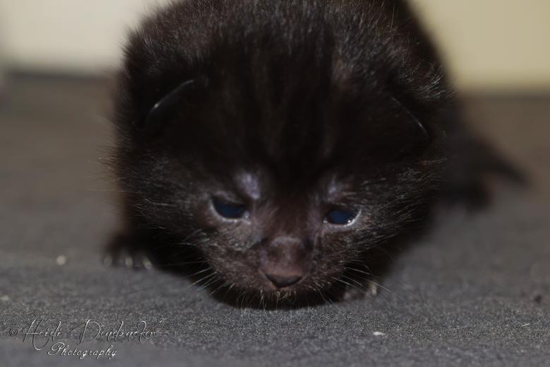 Bieke en haar kittens_075
