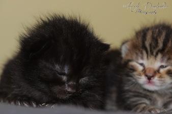 Bieke en haar kittens_076
