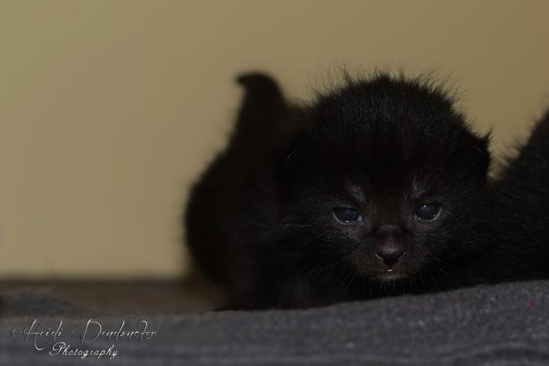 Bieke en haar kittens_078