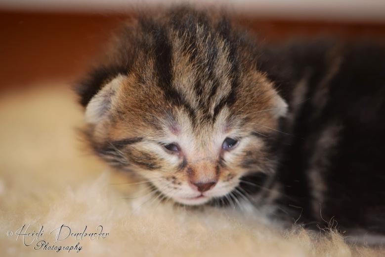 Bieke en haar kittens_079