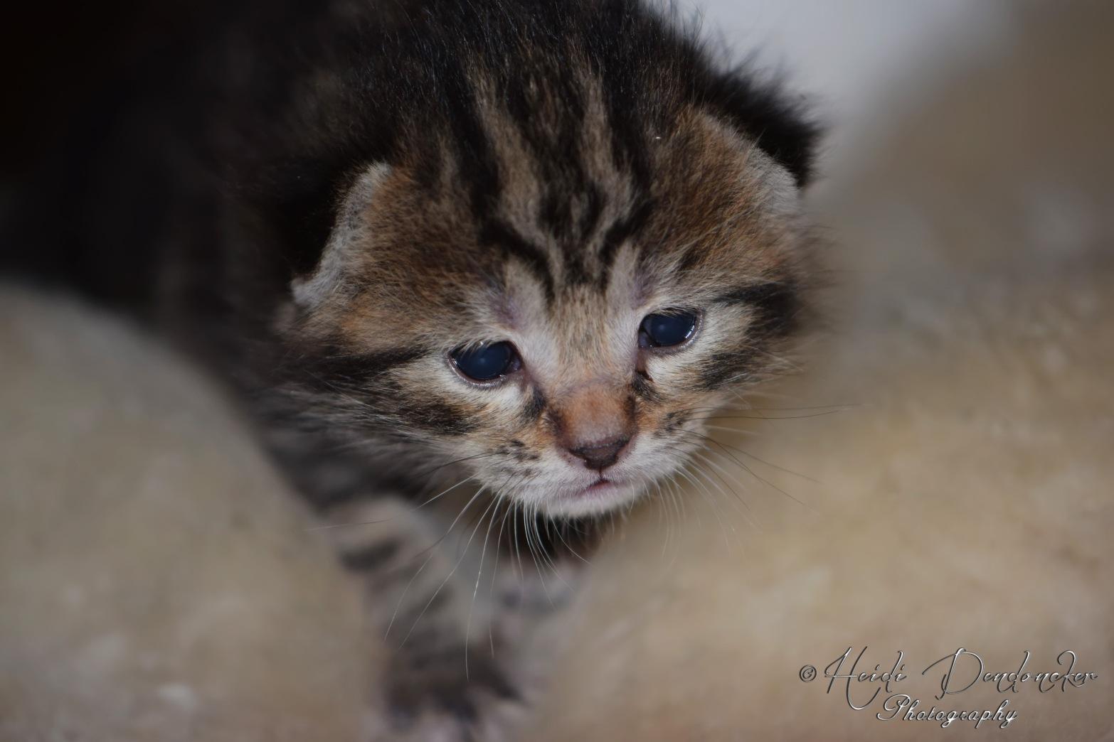 Bieke en haar kittens_080