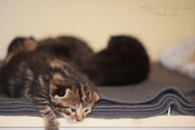Bieke en haar kittens_084