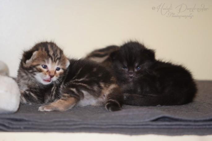 Bieke en haar kittens_085