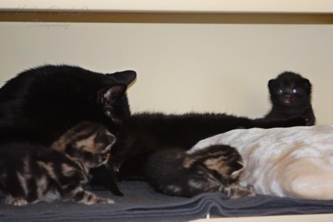 Bieke en haar kittens_091