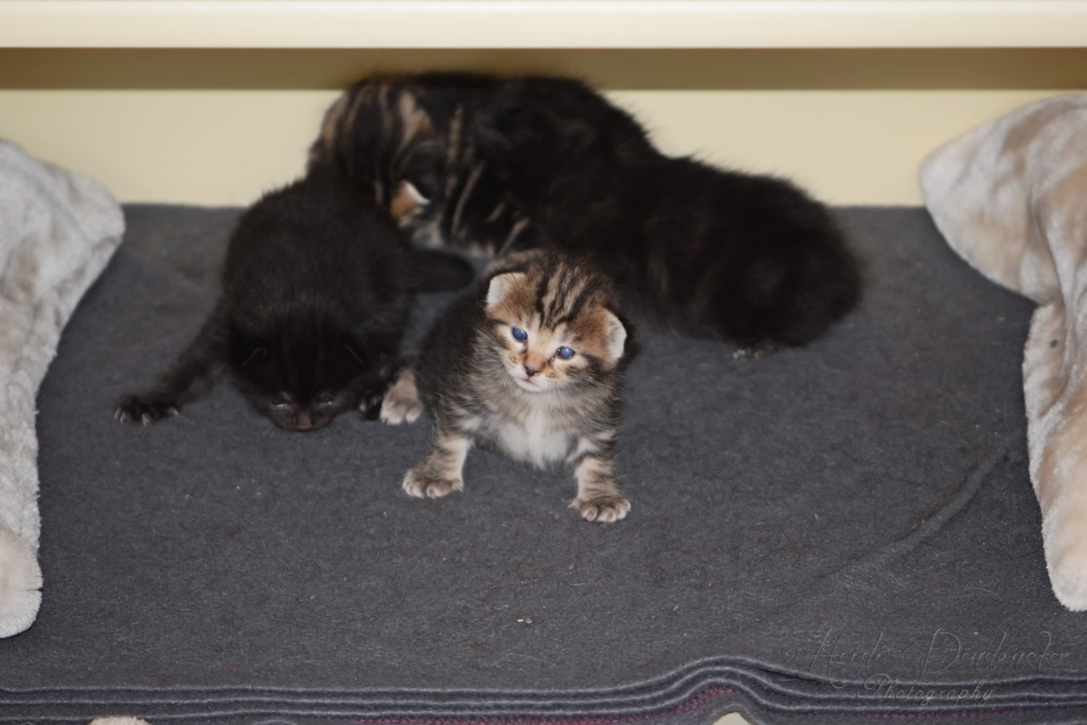 Bieke en haar kittens_109
