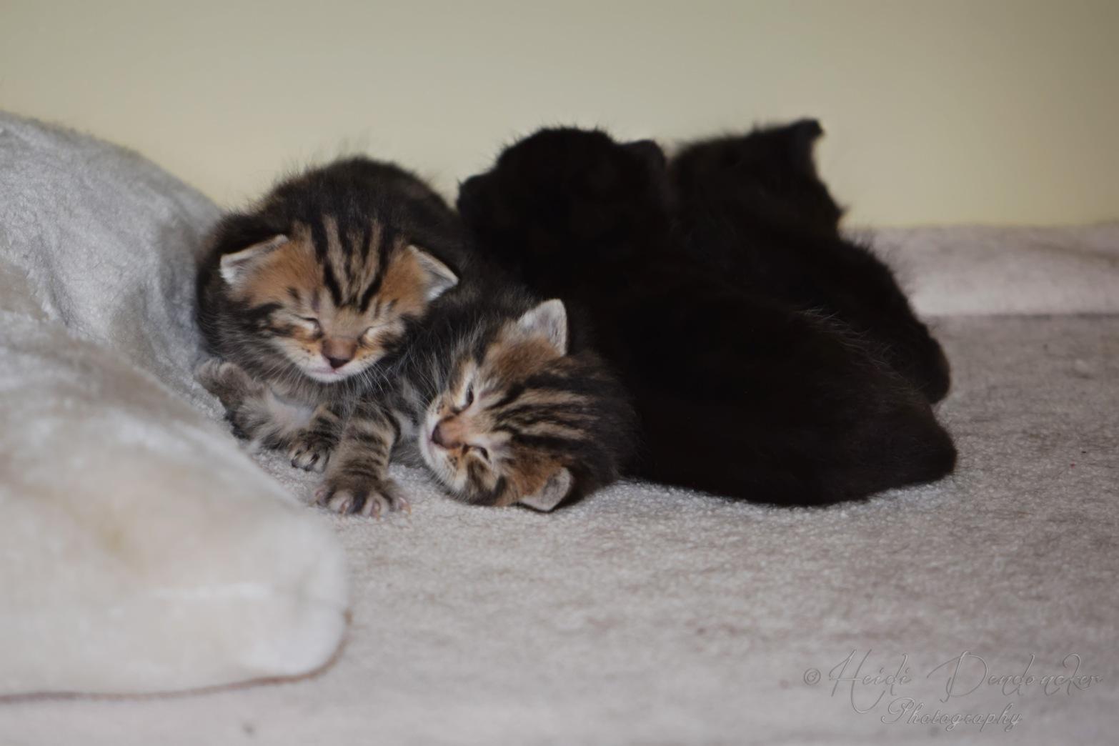 Bieke en haar kittens_138