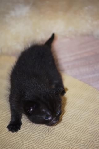 Bieke en haar kittens_161