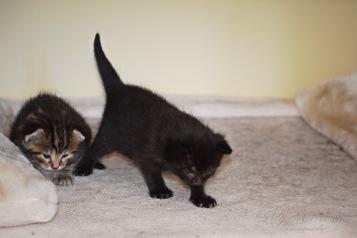 Bieke en haar kittens_163