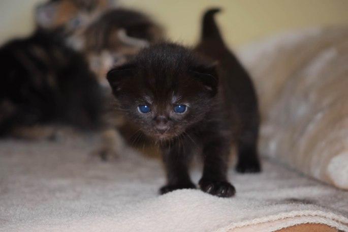 Bieke en haar kittens_172