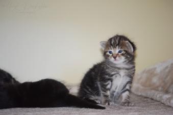Bieke en haar kittens_181