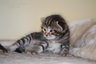 Bieke en haar kittens_182