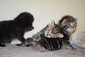 Bieke en haar kittens_190