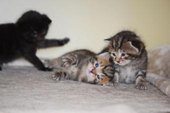 Bieke en haar kittens_191
