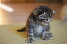 Bieke en haar kittens_204