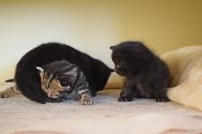 Bieke en haar kittens_205