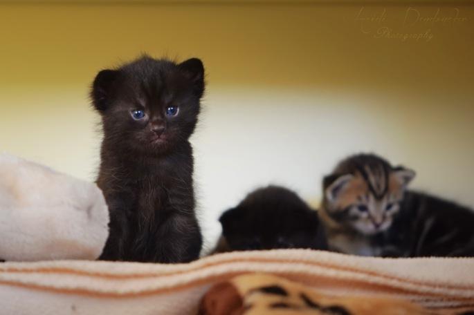 Bieke en haar kittens_209